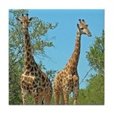 Pair of Giraffes Tile Coaster