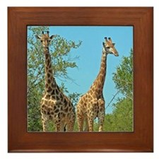 Pair of Giraffes Framed Tile