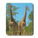 Pair of Giraffes Mousepad