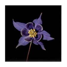 Blue Columbine Flower Tile Coaster