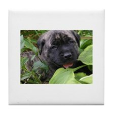 Cute Brindle mastiff Tile Coaster