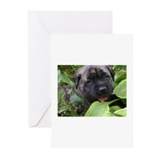 Cute Brindle mastiff Greeting Cards (Pk of 10)