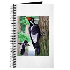 Journal Ivory-billed Woodpecker
