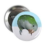 Snowy Quaker Parrot Button