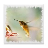 Rufus Hummingbird Tile Coaster