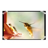 Rufus Hummingbird Postcards (Package of 8)