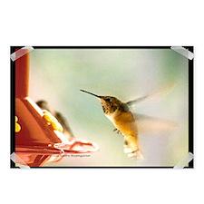 Rufus Hummingbird Postcards (Package of 8)