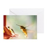 Rufus Hummingbird Greeting Cards (Pk of 10)