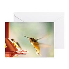 Rufus Hummingbird Greeting Cards (Pk of 10)