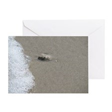 Sandy Seashell Greeting Card