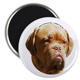 "Dogue De Bordeaux 2.25"" Magnet (100 pack)"