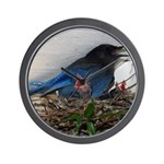 Baby Steller's Jays Wall Clock