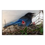 Baby Steller's Jays Rectangle Sticker 10 pk)