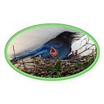 Baby Steller's Jays Oval Sticker (50 pk)
