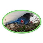 Baby Steller's Jays Oval Sticker (10 pk)