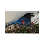 Baby Steller's Jays Rectangle Magnet