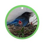 Baby Steller's Jays Ornament (Round)