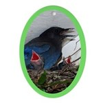Baby Steller's Jays Oval Ornament