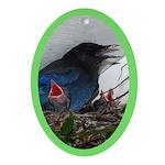 Baby Steller's Jays Oval Ornament