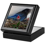 Baby Steller's Jays Keepsake Box
