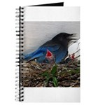 Baby Steller's Jays Journal