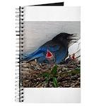 Baby Steller's Jays Journal