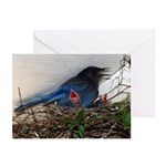 Baby Steller's Jays Greeting Cards (Pk of 10)