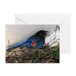 Baby Steller's Jays Greeting Cards (Pk of 10)