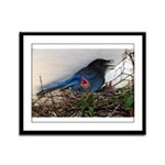 Baby Steller's Jays Framed Panel Print