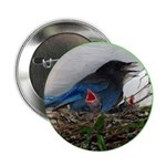 "Baby Steller's Jays 2.25"" Button (10 pack)"