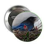 "Baby Steller's Jays 2.25"" Button (10 pack)"