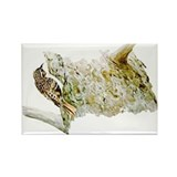 Brown Creeper Rectangle Magnet