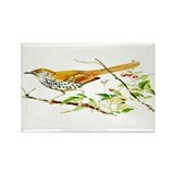 Brown Thrasher Rectangle Magnet (100 pack)