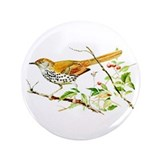 Brown Thrasher 3.5&quot; Button