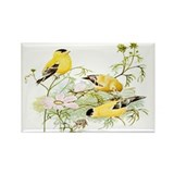 American Goldfinch Rectangle Magnet (10 pack)