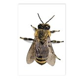 Big Honey Bee Postcards (Package of 8)