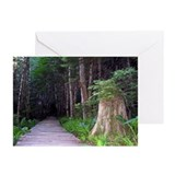 Cute Paths and trails Greeting Cards (Pk of 20)