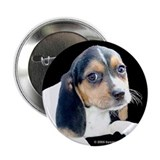 Tri-color Beagle Button