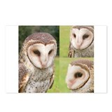 Unique Fearful owl Postcards (Package of 8)