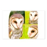 Funny Fearful owl Postcards (Package of 8)