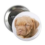 Dogue De Bordeaux Puppy 2.25&quot; Button (100 pack)