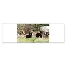 Black Bear cubs Bumper Bumper Sticker