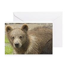 Brown Bear Art Greeting Cards (Pk of 20)