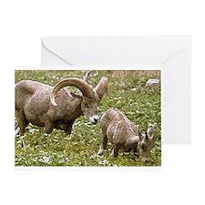 Bighorn Art Greeting Card