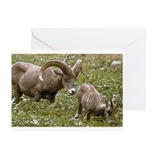 Bighorn Art Greeting Cards (Pk of 20)