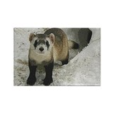 Black-Footed Ferret Art Rectangle Magnet