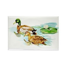 Mallard Ducks Rectangle Magnet (100 pack)
