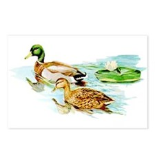 Mallard Ducks Postcards (Package of 8)