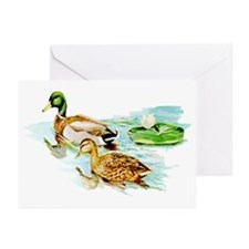 Mallard Ducks Greeting Cards (Pk of 10)