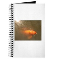 Hungry Koi Journal